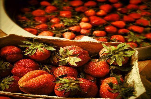 Trabajo recogida fruta francia