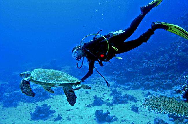 Trabajar como Instructor o Guía de Buceo en La Riviera Maya