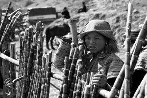Organizaciones para realizar voluntariado en Vietnam