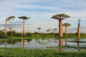 madagascar turismo viajar trabajar