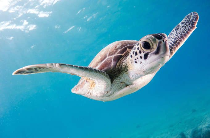 voluntariado con tortugas en Estados Unidos