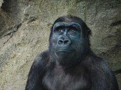 Becas de la Fundación Barcelona Zoo