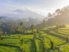 Voluntariado en Bali