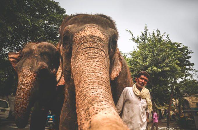 8 Países para hacer un voluntariado con elefantes