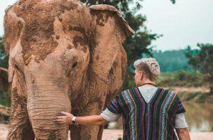 Países para hacer un voluntariado con elefantes