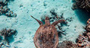 Trabajo en maldivas como cuidador de tortugas