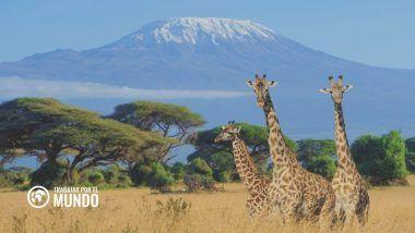 Trabajo en África en programas de conservación ¿En qué consisten?